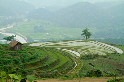 face of vietnam - Bac Ha ricefields, Lao Cai