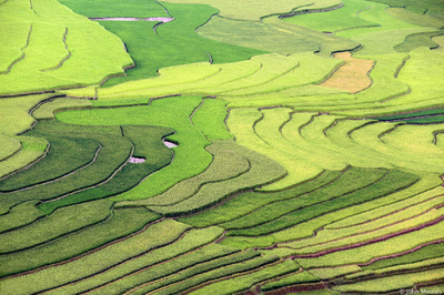 face of vietnam - Khau Pha Pass, ricefields, Yen Bai