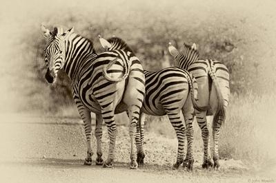 face of vietnam - Kruger National Park
