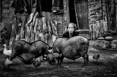 face of vietnam - Thai Yang lady and her pigs in Bountai District