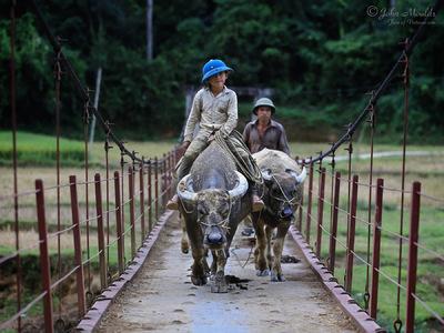 face of vietnam - Lu ethnic boy in Ban Ho