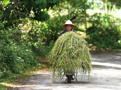 face of vietnam - Xa San Thang