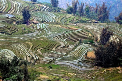 face of vietnam - Ricefields in Y Ty, Bat Xat District, Lao Cai