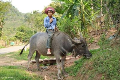 face of vietnam - Moc Chau, Son La Province