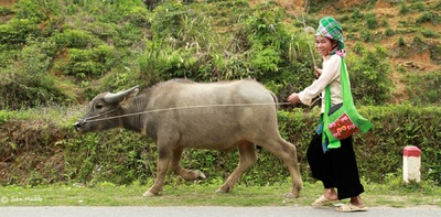 face of vietnam - Than Uyen, Lai Chau