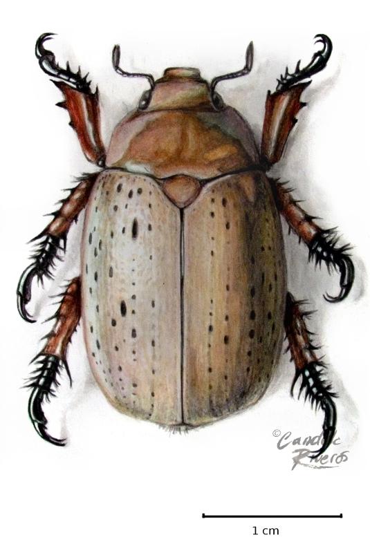 Candela Riveros - Natural History