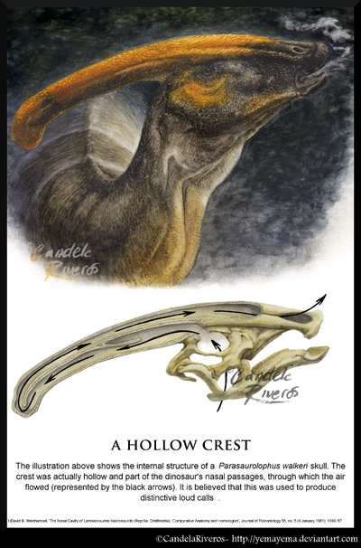 Parasaurolophus head poster